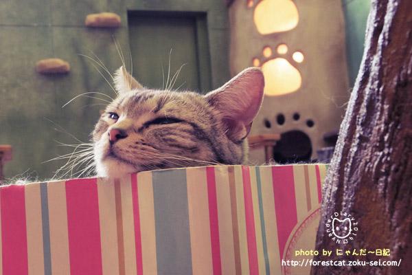 眠い猫 猫カフェ アメショ