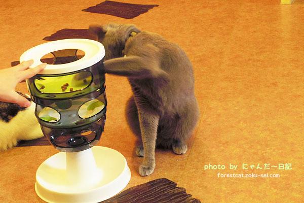 カリカリマシーン 猫 おもちゃ