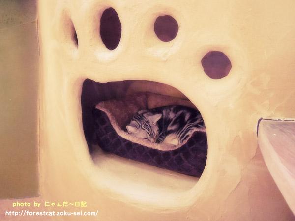てまりのおうち 可愛い猫カフェ 肉球