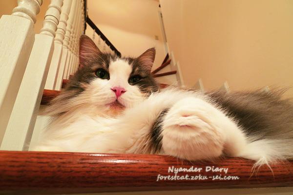 階段の猫 うにょっとした猫の手