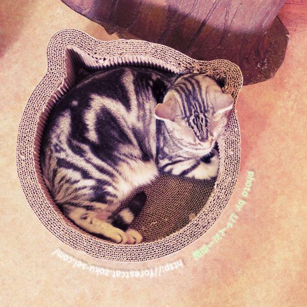 猫型ベッド アメショ 猫