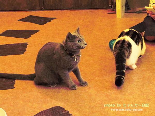 ピンときた猫 猫部 ロシアンブルー